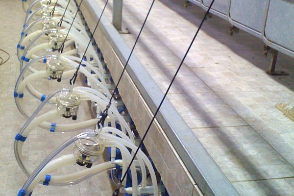 Silicone Milking Units